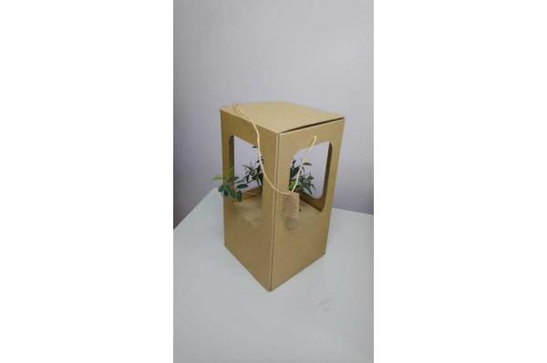 živo stablo masline u kutiji /Live olive tree in a jar